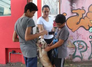 Perro huye de casa para consolar a una familia