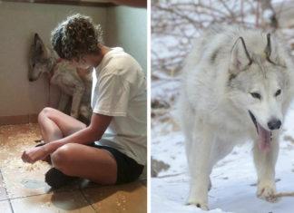 Perro lobo hambriento le tenía miedo a todo