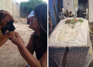 Perro no se separa de su humana en el funeral