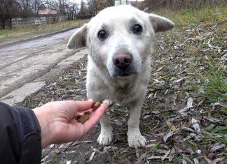 Perro perdido tiene el corazón roto porque en su casa no lo quieren