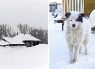 Perro salva a bebé abandonado en el frío extremo en el porche