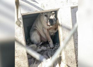 Perro se esconde en la caseta cuando su familia se muda