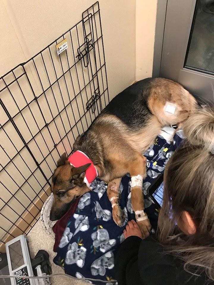 perro se recupera