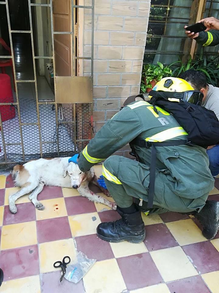 Perro sobrevive atentado en Barranquilla