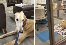 Perro solitario en la biblioteca espera que le lean
