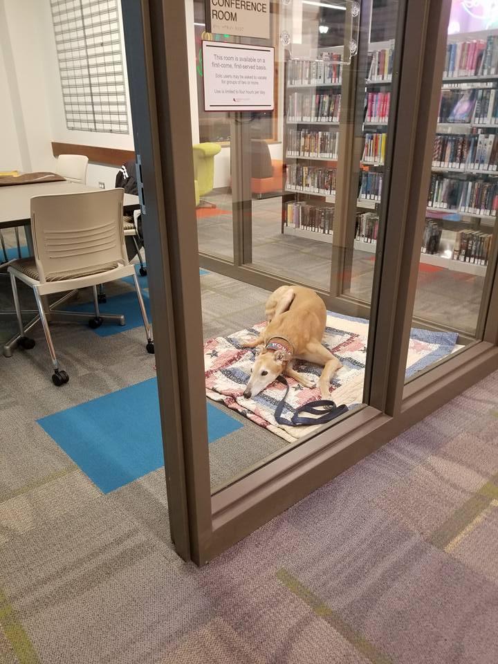Perro solitario en la biblioteca