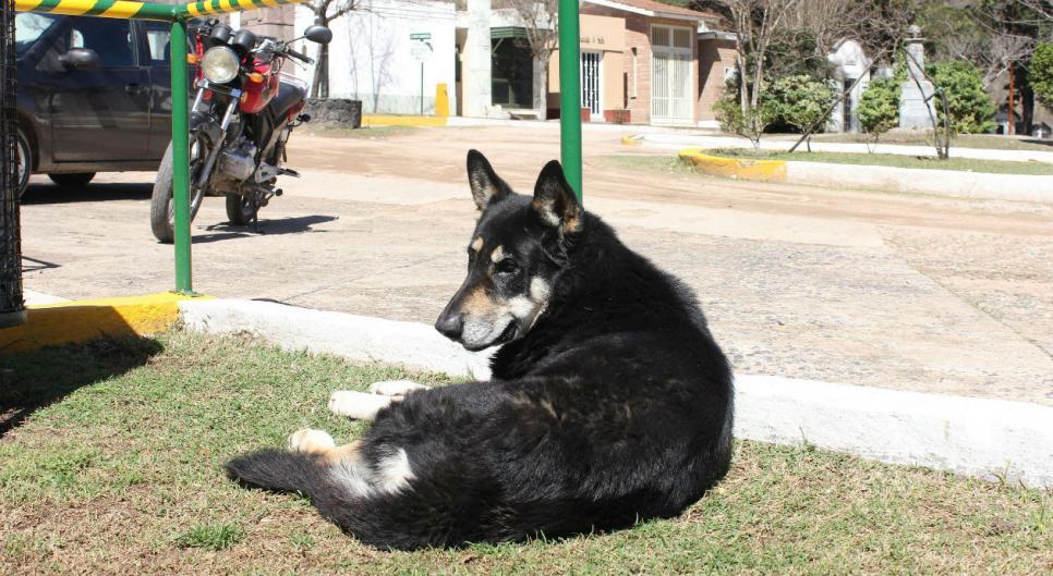 Perro vivió 11 años en el cementerio