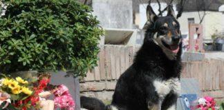 Perro vivió 11 años junto a la tumba de su dueño