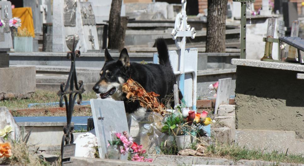 Perro vivió en el cementerio