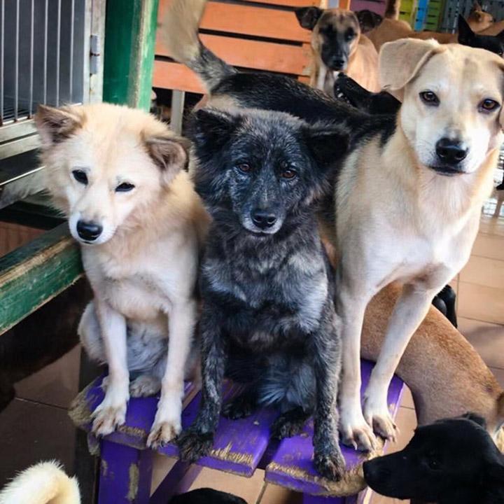 Perros del refugio