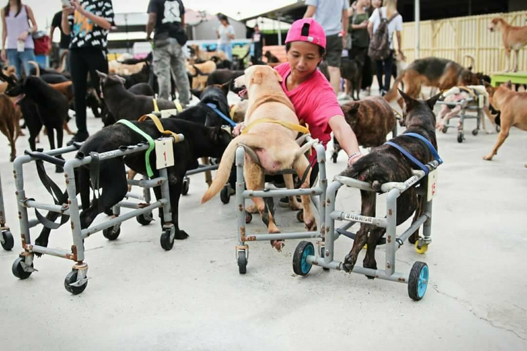 Perros en sillas de ruedas