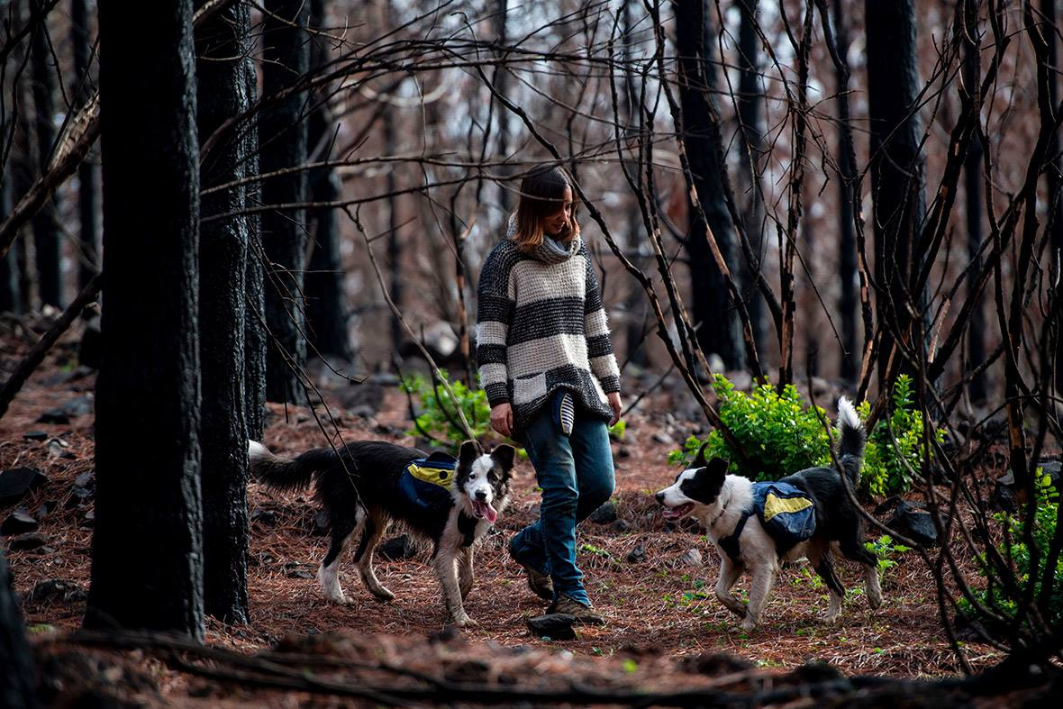 Perros reforestan bosque