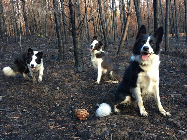 Perros reforestando un bosque