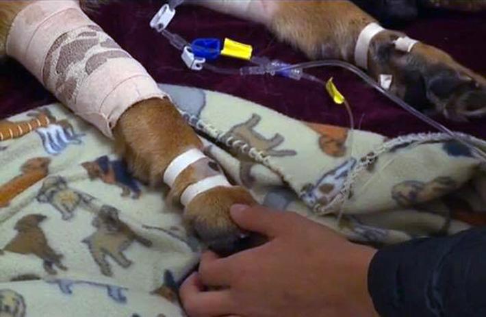 Rex en el hospital
