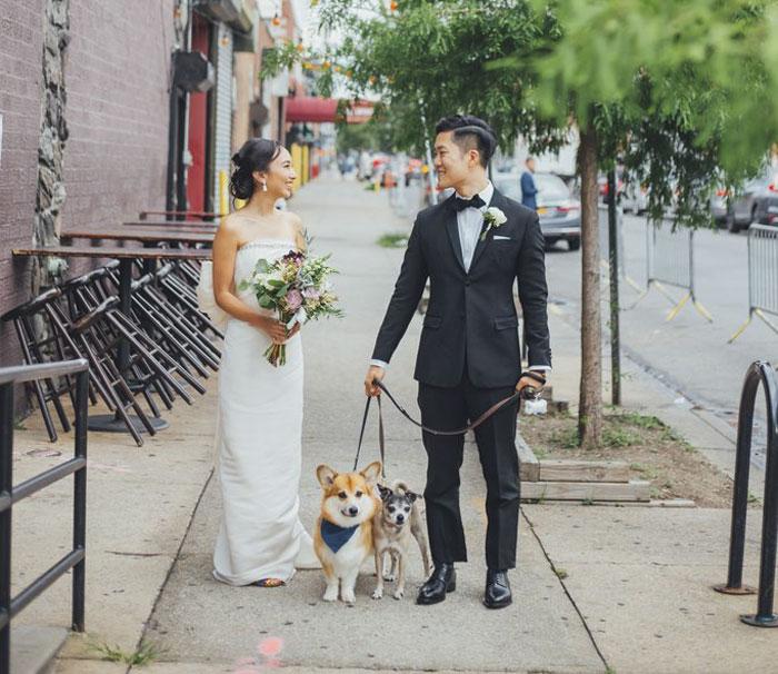 Tendencia perros en las bodas