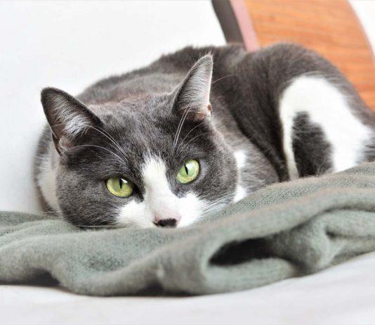Desparasitar a tu gato