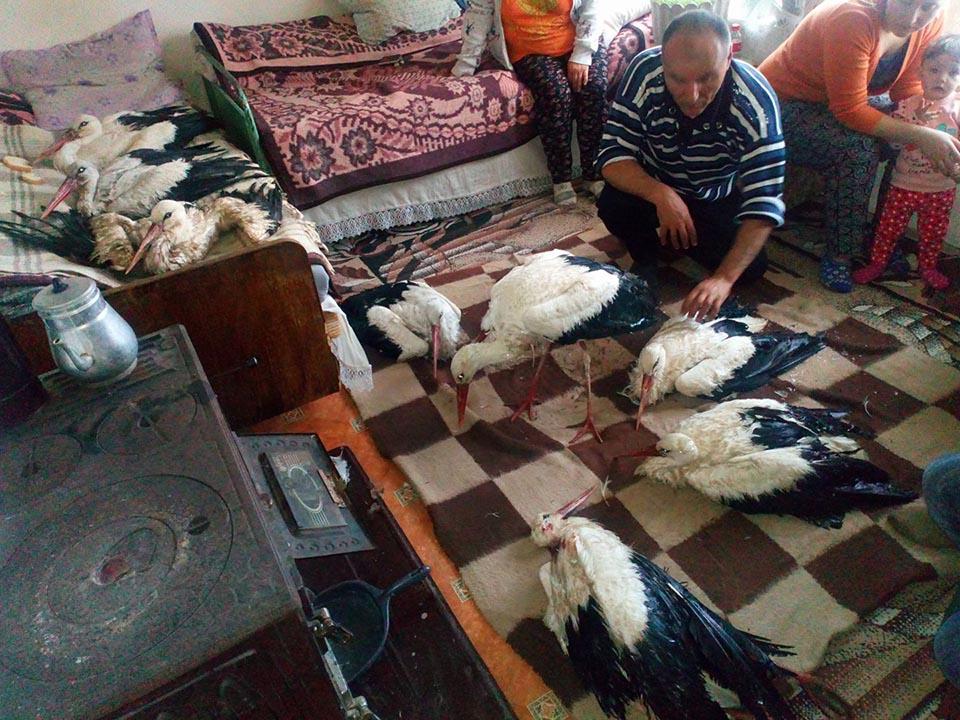 Aldeanos ayudan a cigüeñas congeladas en Bulgaria