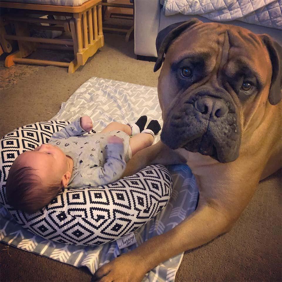 Brutus ama a Kayden