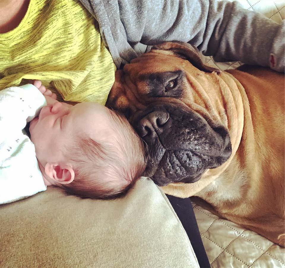 Brutus con el bebé