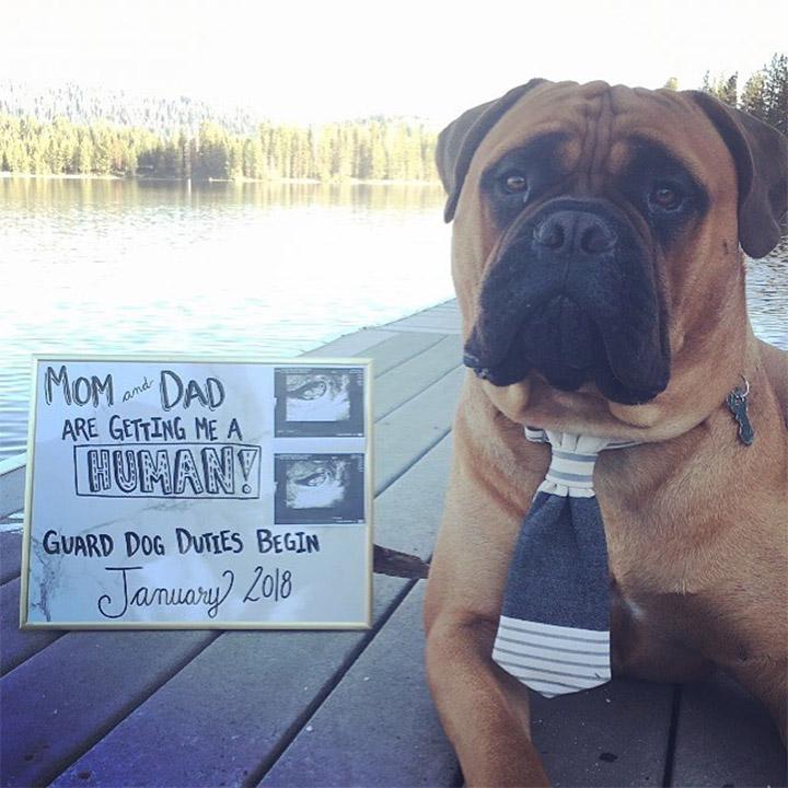 Brutus espera nuevo bebé