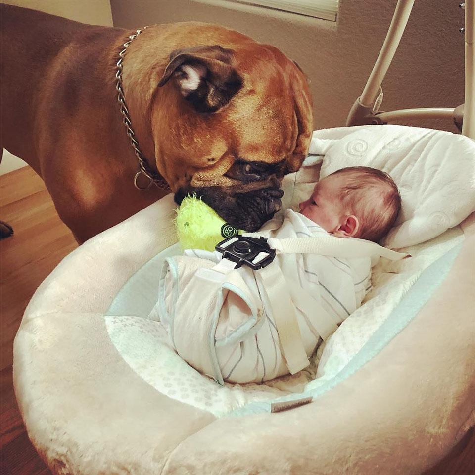 Brutus lleva juguete a Kayden