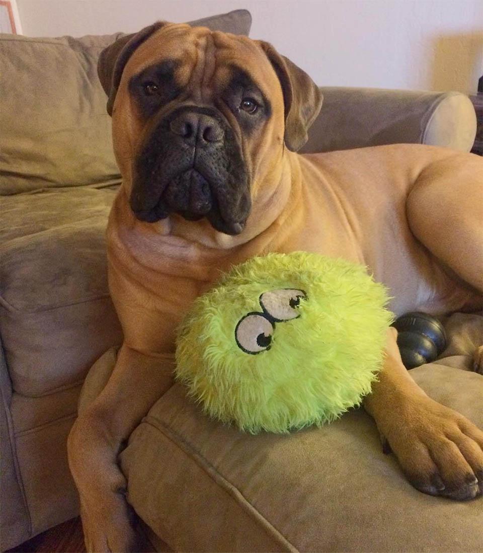 Brutus y su juguete favorito