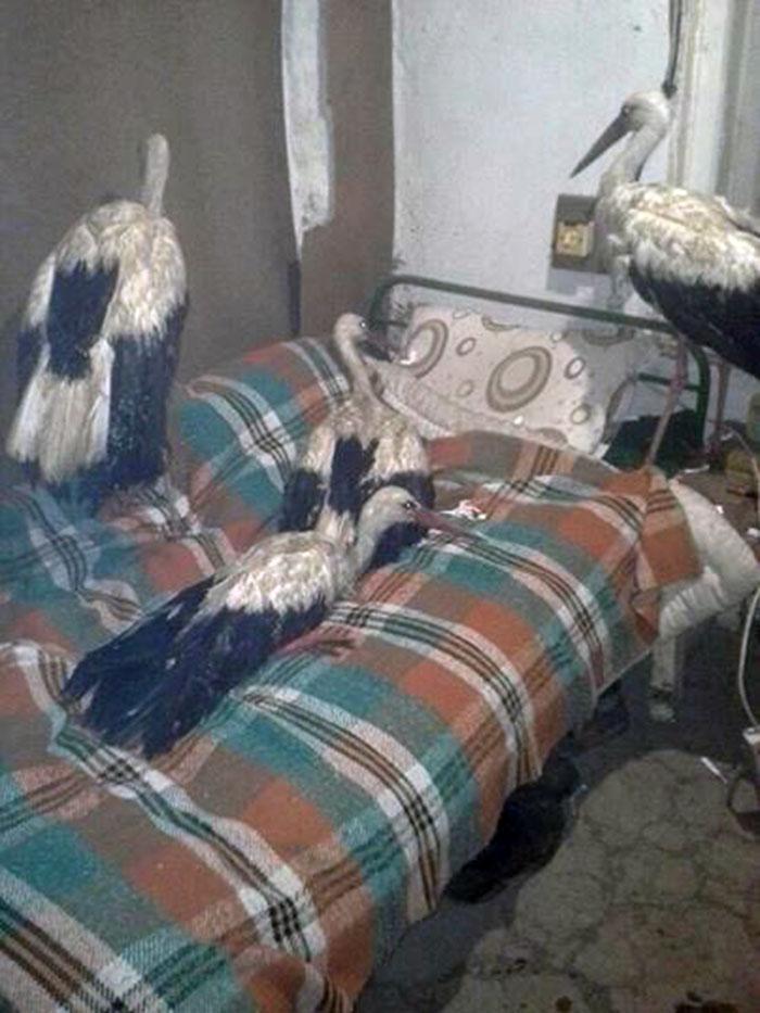 Cigüeñas en habitación