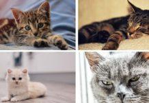 ¿Cómo saber la edad de un gato?