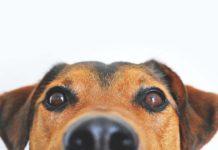 Cómo ven los perros