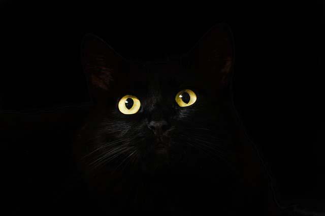 Gatito negro en la oscuridad