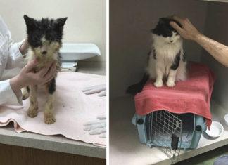 Gato atrapado dos años en portador de mascotas