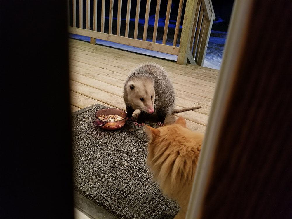 Gato y zarigüeya son amigos