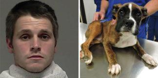 Hombre condenado a 12 años de prisión por maltratar a un cachorro