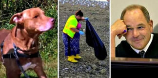 Juez castiga a los maltratadores de animales