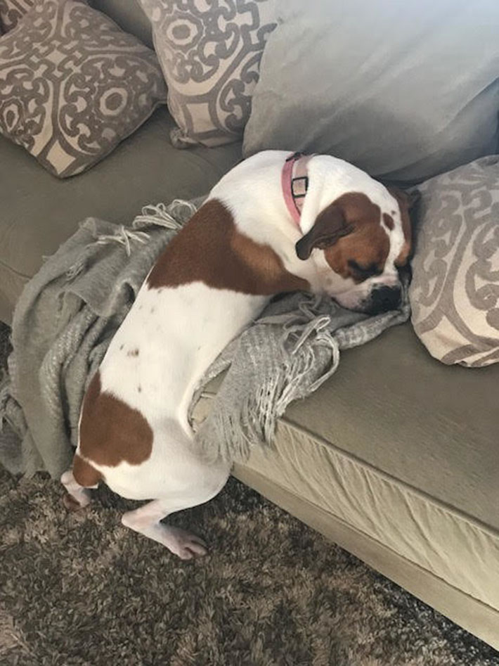 Lexi acostada en el sofá