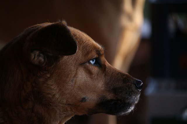 Los perros no ven en blanco y negro