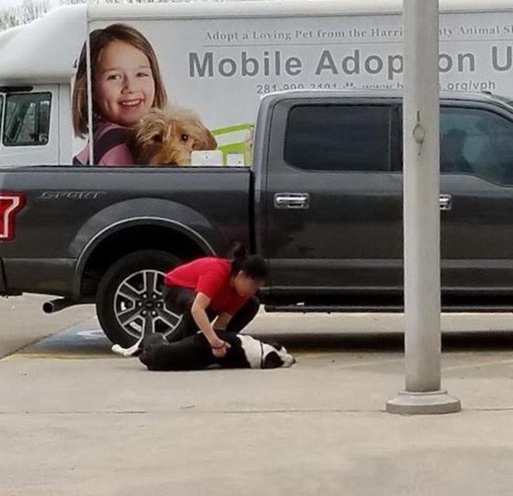 Mujer arrastra perro al refugio