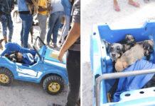 Mujer lleva perros en auto de juguete al veterinario