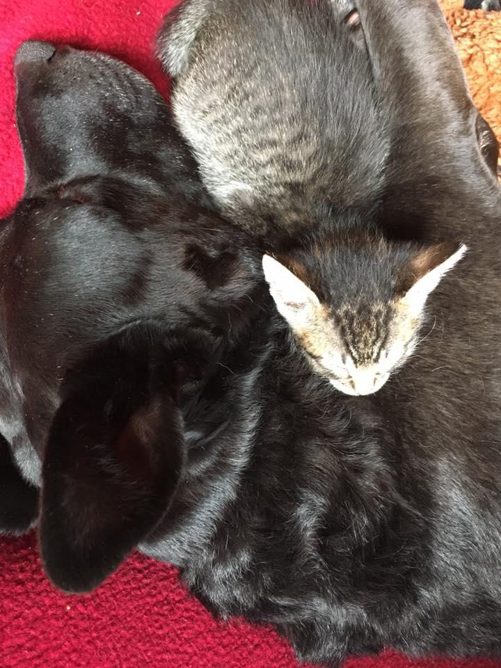 Perrita adopta gatos
