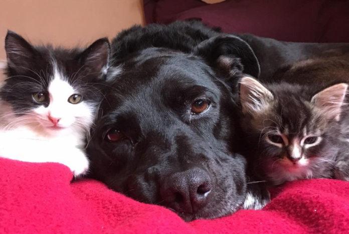 Perrita ha sido madre adoptiva de 100 gatitos