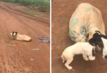 Perrita rescatada con cachorros atados en un saco