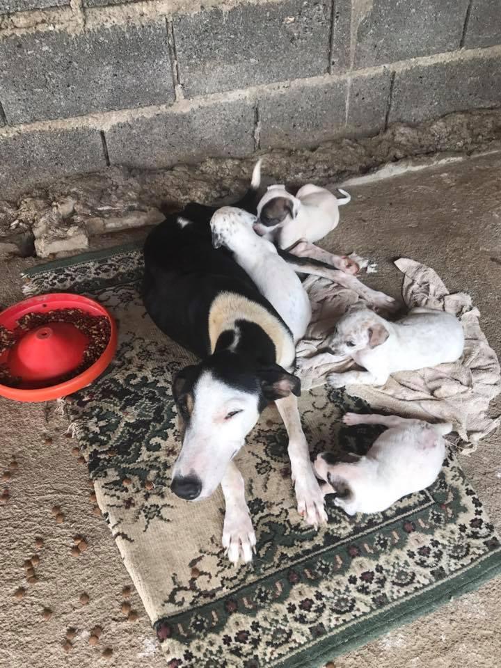 Perrita rescatada con cachorros