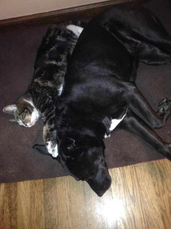 Perrita y gatos