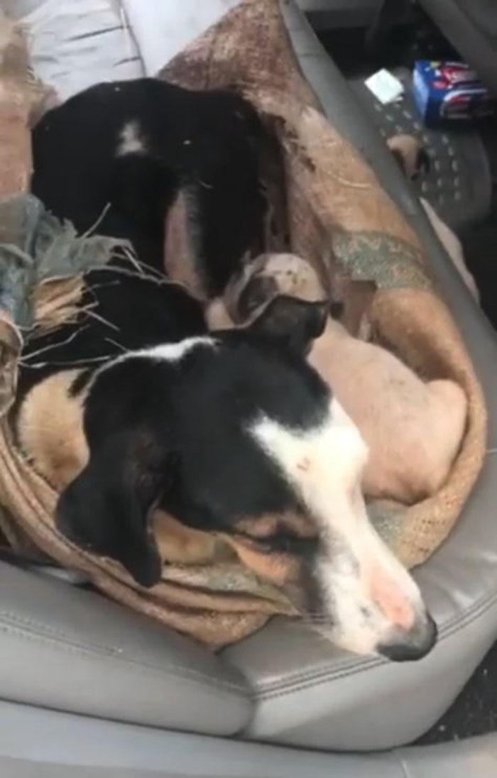 Perrita y sus cachorros