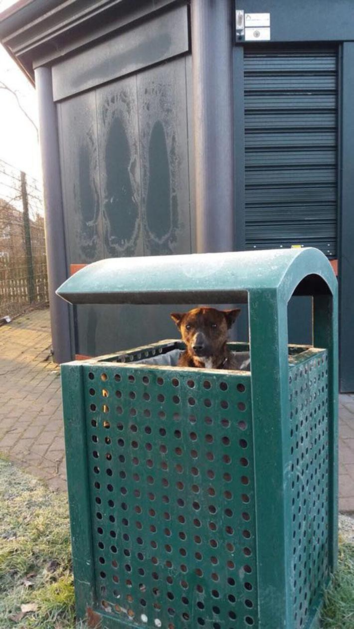 Perro abandonado en bote de basura