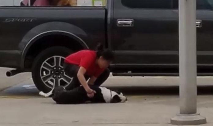 Perro asustado arrastrado al refugio por el dueño