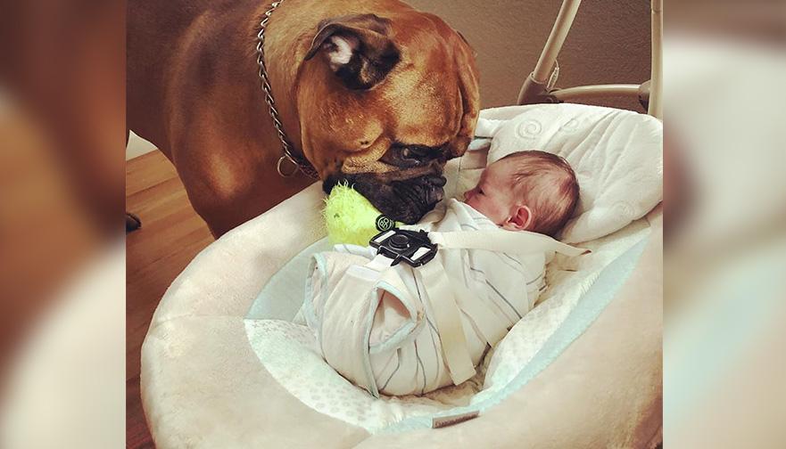 Perro consuela a su hermanito que llora