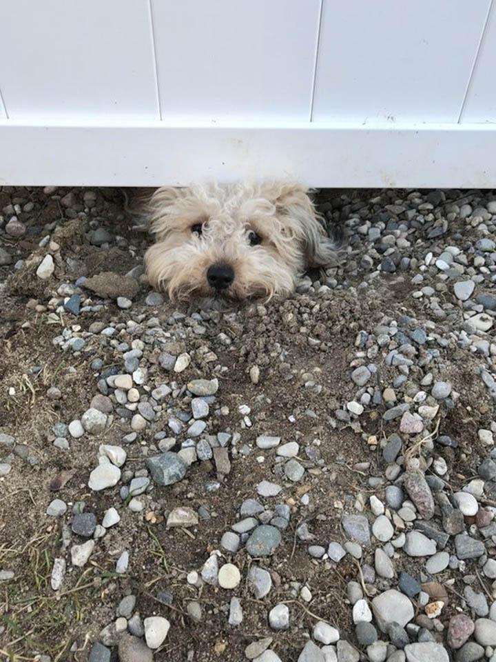 Perro curioso