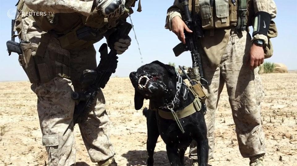Perro del Ejército