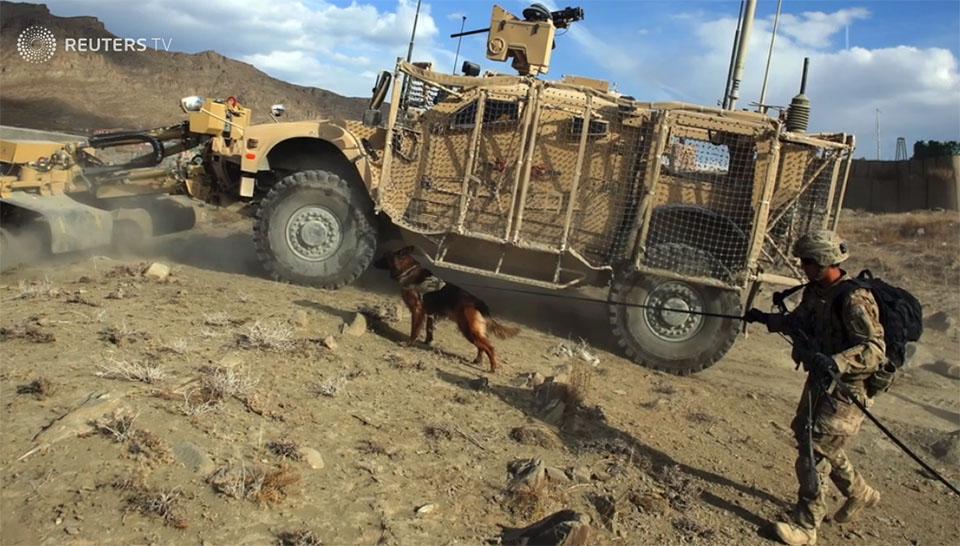 Perro detector de bombas